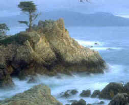 "The famous ""Lone Cypress"" at Pebble Beach"